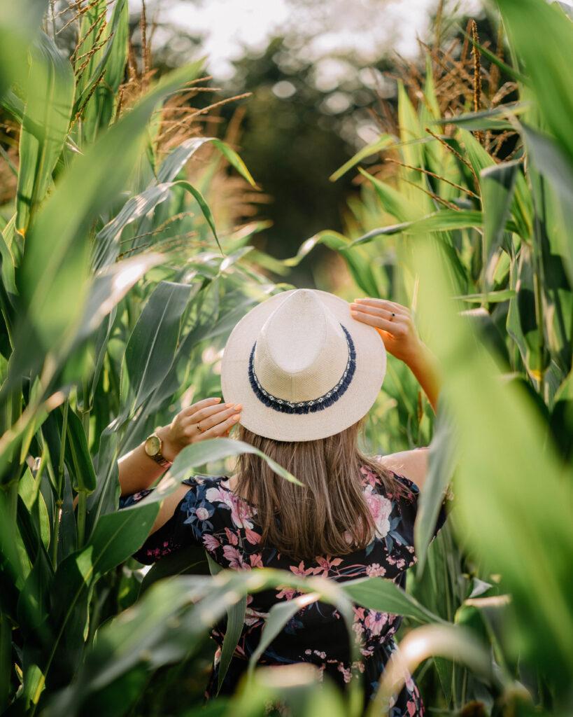 sesja w kukurydzy kobieca